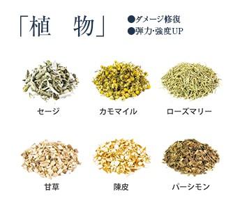 香草カラーのハーブ 01