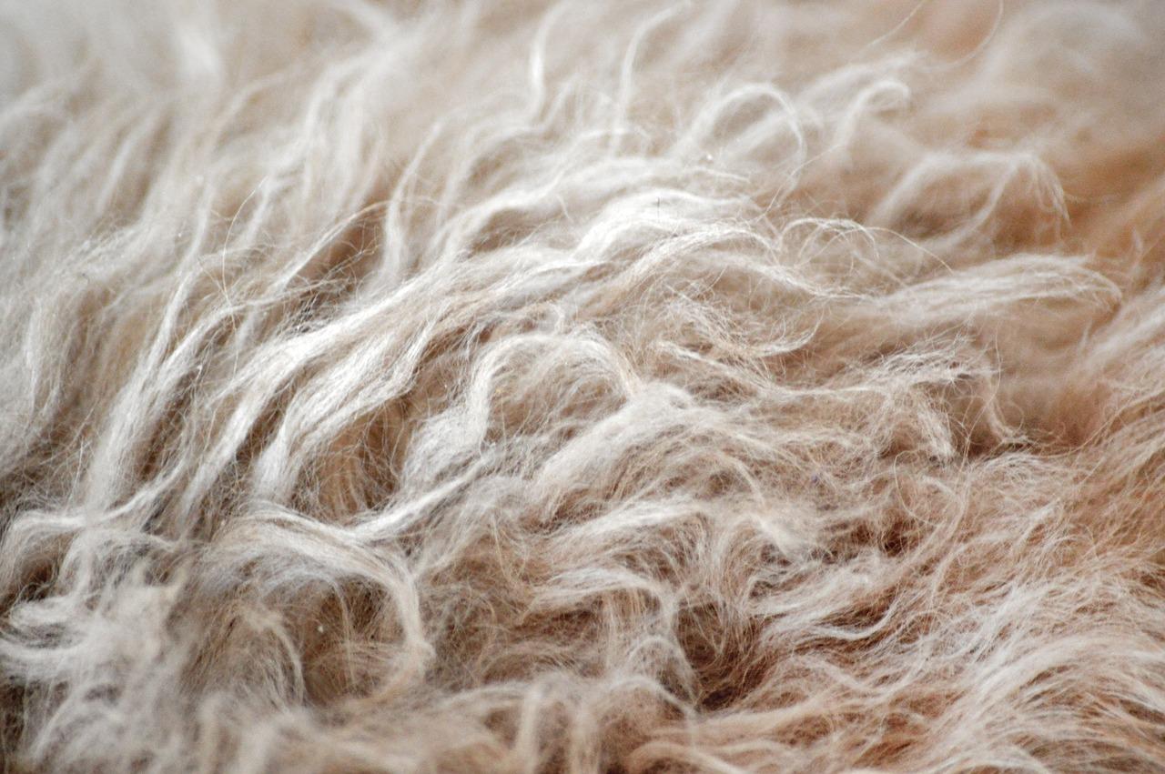 ビビリ毛、毛先チリチリのイメージ画像